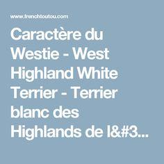 Caractère du Westie - West Highland White Terrier - Terrier blanc des Highlands de l'ouest- groupe 3 : chiens et chiots