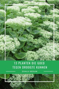 tuinideeën tips tuinideeën tips Water Plants, Garden Plants, Hydrangea Landscaping, Perennial Vegetables, Low Maintenance Garden, Love Garden, White Gardens, Trees To Plant, Garden Inspiration