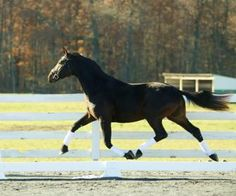 MW Fabulous - This is a special opportunity for a breeding farm, owner, or trainer with 4yo test ambitions in 2016. This is a top class stallion by the world-reknown Furstenball. A pedigree littered with St.Pr. mares. Quality producing quality. Fair, honest and much to offer US breeders! $99,000