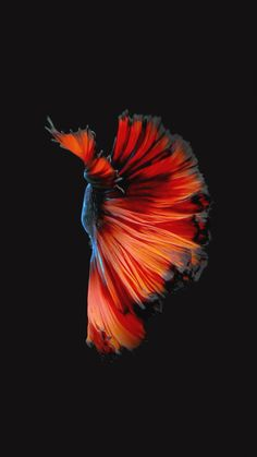 Get Apples Live Fish Wallpapers Back Your Iphone Ios 11 Apple Wallpaper Fish Wallpaper Iphone, Live Fish Wallpaper, Iphone 7 Wallpapers, Photo Wallpaper, Mobile Wallpaper, Iphone Backgrounds, Live Backgrounds, Cool Live Wallpapers, Ios 11 Wallpaper