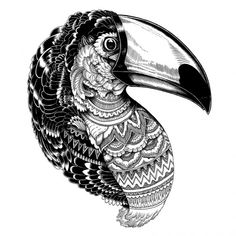 black and white tucan illustration