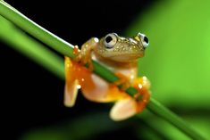 Top 10 Macro Photography Tips - 42 West, the Adorama Learning Center Macro Photography Tips, Photography Tours, Close Up Photography, World Photography, Winter Photography, Best Macro Lens, Small Frog, Macro Photographers, Extreme Close Up