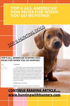 American Foxhound, American Dog, The Fox And The Hound, Hunting Dogs, View Map, Hunters, Beagle, Small Dogs, First Time