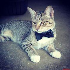 Suit Up. - http://cutecatshq.com/cats/suit-up/