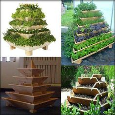 Plant pyramid : maximize growing space with a small footprint.