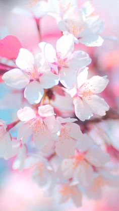 Photography Wallpaper Iphone Pink Flowers 23 Ideas For 2019 Aesthetic Iphone Wallpaper, Nature Wallpaper, Trendy Wallpaper, Hd Wallpaper, Pretty Flowers, Pink Flowers, Beautiful Flowers Pictures, Flower Aesthetic, Pink Aesthetic