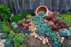 Succulent Rock Garden, Succulent Landscaping, Landscaping With Rocks, Succulents Garden, Backyard Landscaping, Landscaping Ideas, Dessert Landscaping, Succulent Planters, Flowers Garden