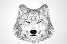 Wolf, Abdulaziz Sahin
