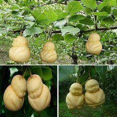 Venda por Atacado 2015 novo raro bebê ginseng fruta pêra sementes ornamentais bonsai engraçado erva árvore sapodilla solanum muricatum sementes plantas jardim #70960, $0.22 em Pt.dhgate.com | DHgate