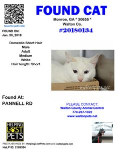 #FOUNDCAT #Shelter ID: #20180134 #Monroe (PANNELL RD)  #GA 30655 #Walton Co.  #Cat 01-30-2018! Male #Domestic Short Hair White/Turned in stray 1/30/18; owner unknown. Hold expires 2/2/18 at 9:00 AM. No pending applications or rescue inquiries.  CONTACT wcanimal@co.walton.ga.us           More Info Photos and to Contact: http://ift.tt/2nq2bPX  To see this pets location on the HelpingLostPets Map: http://ift.tt/2BGpklE  Let's get this cat home! #HelpingLostPets