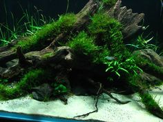the aquascaping