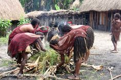 Baliem Valley Adventure Tour Packages Indonesia 5 Days 4 Nights. Get best price only at Koonam.
