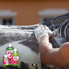 Help de huid van je paard een handje. Verminder schilfers en een droge huid met behulp van Aloe Vera shampoo. | Give the skin of your horse a helping hand. Reduce flakes and dry skin with Aloe Vera shampoo. #aloevera #skincare #horseneeds #horsersupplies #dryskin Aloe Vera Shampoo, Horse Supplies, Dry Skin, Conditioner, Horses, Instagram Posts, Horse