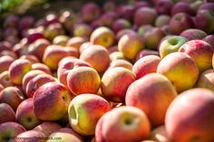 How to Have the Best Time at the NC Apple Festival | The Esmeralda Inn & Restaurant