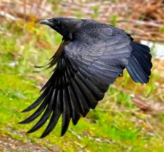 I, Crow by James Two Crows