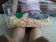 98 best cage images on pinterest hamster stuff hamster house and
