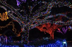 Best places to see holiday lights in Houston! #Christmas BilliardFactory.com