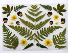 Handmade botanical laminated placemat.  My own idea. Real pressed plants are laminated inside plastic placemat. Placemat is wipeable and waterproof.  Size: 21 cm * 30 cm = 8.26 * 11.81 inch Thickness 500 micron.  ******* All creations are made by me personally. Each item is unique, because it based on my own ideas, made by hands, with use of natural materials. In 99% cases I make only 1 unique item, no copies.  ******* Colors of items in reality may be slightly different from the color o...
