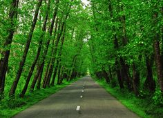 جنگل گیسوم، گیلان .. Gisom Forest, Gilan, Iran