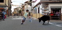 Santacara: Vacas de Santos Zapatería - Fiestas de Santa Eufem... Street View, Saints, Cows, Fiestas