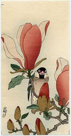Koson	  A Java Sparrow on a Flowering Magnolia