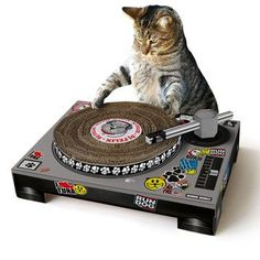 Cat scratch turntable!? I can't even! So cute.