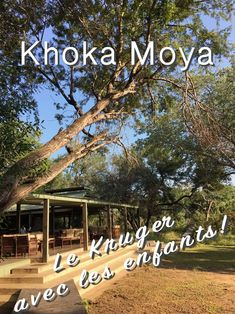 Khoka Moya Travel With Kids, Family Travel, Africa, World, Hotels, Young Children, South Africa, Travel, Suitcase