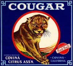 Covina CA, Cougar Brand fruit crate label