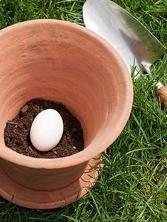When you plant a pot, put an un-cracked egg in the bottom. As the egg decomposes it will feed the plant.