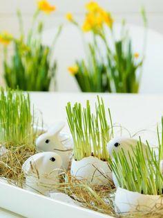 Pääsiäiskoriste munankuori istutus