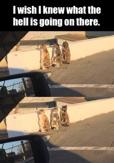 Funny cat - meme - http://jokideo.com/funny-cat-meme-22/