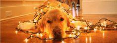 christmas dog#orange christmas pictures
