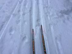 På ski i Oslomarka , Norway Office Supplies, Pictures