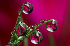 Mind-Boggling Water Drop Reflections (13 photos) - My Modern Metropolis. Beautiful! CHM
