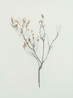 A selection of delicate photos by Brisbane, Australia-based Jared Fowler. More images below. Jared Fowler on Behance Via: I Love Art Botanical Illustration, Botanical Art, Arte Floral, Love Art, Dried Flowers, Art Inspo, Planting Flowers, Beautiful Flowers, Painting