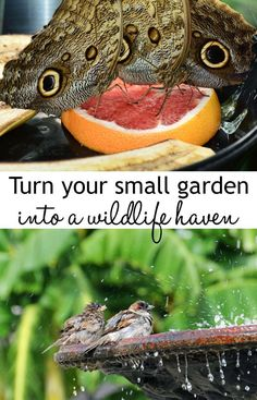 Urban Garden Design Small gardens and urban gardens can still be havens for wildlife! - Create a thriving wildlife garden in a small space, filled with chirping birds, buzzing bees and pretty butterflies. Gardening advice for small gardens. Garden Care, Gardening For Beginners, Gardening Tips, Gardening Services, Gardening Vegetables, Gardening Supplies, Companion Gardening, Gardening Courses, Gardening Quotes