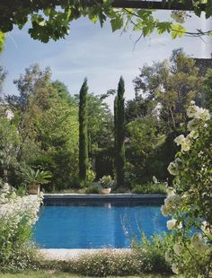 Just lovely - the vertical accents of the Cupressus give this swimming pool garden a real 'Mediterranean' feel.