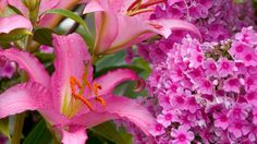 Espécies que florescem agora na primavera | Primavera Garden Center