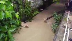 """""""O Grito do Bicho"""": Resgate de um cão  em rio - Colômbia"""