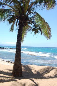 Palm Tree on a beautiful sandy beach