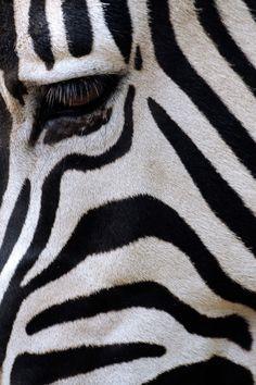 Hier zie je duidelijk een zebra textuur.  Je ziet niet duidelijk een zebra maar door de wel bekende texturen herken je het dier gelijk.