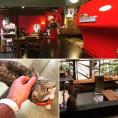 Submit to your feline overlords @ Cafè Yaboo. #taipei #digitalnomad #travel #remotework #workhardanywhere #coffice #workandtravel #workanywhere #wha #nomad #cafe #coffee #coffeeshop #appleandcoffee #workremote #remoteworking #codeanywhere #remoteoffice #taiwan @freshbooks