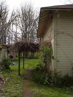 The grape arbor on the South side of the schoolhouse.