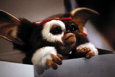 Gizmo the little Mogwai from Gremlins. I awwed to infinity when he put on the bandana!