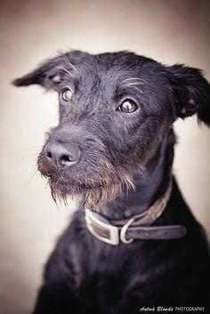 Anhelos - antua blonde photography -  fotógrafo solidario - barcelona - animal - fotos - reportajes - animal de compañía - maresme - cat - gat - gato - dog - gos - perro