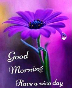 Good Morning Wishes Friends, Good Morning Dear Friend, Good Morning Happy Sunday, Good Morning Cards, Good Morning Greetings, Good Morning Quotes, Sunday Wishes, Afternoon Quotes, Weekend Quotes