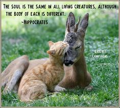 The soul is the same in all living creatures, although the body of each is different. -Hippocrates