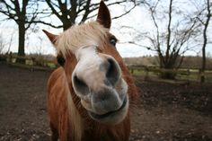 Bieten Reitbeteiligung auf Haflinger in Schlutup in Lübeck | Tiere | Kleinanzeigen http://www.tier-kleinanzeigen.com