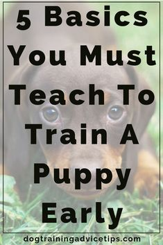 5 Basics You Must Teach to Train a Puppy Early - Dog Obedience Training Tips - . - 5 Basics You Must Teach to Train a Puppy Early – Dog Obedience Training Tips – - Puppy Training Tips, Crate Training, Training Your Dog, Potty Training, Training Collar, Training Classes, Training Videos, Toilet Training, Agility Training