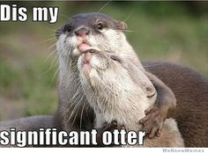 "I like how ""significant otter"" comes up in Google search before ""significant other."" This is adorable."
